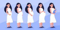 أسابيع الحمل